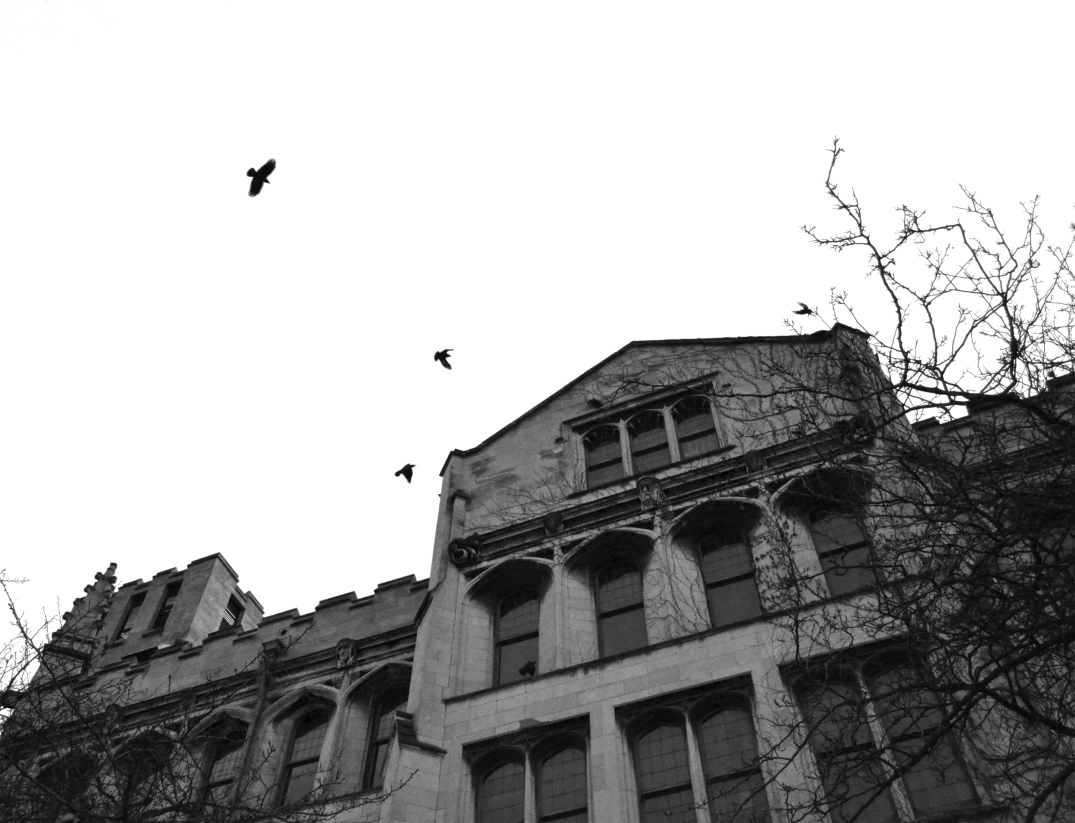 Birds | University of Chicago | Main Quad | Hyde Park, Chicago |